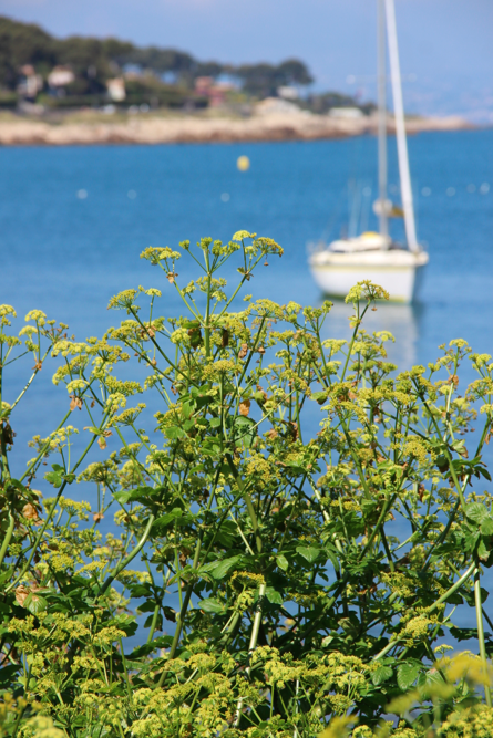 Cap d'Antibes White Boat