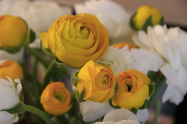 White and Yellow Flowers Ranunculi