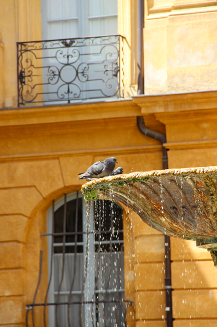Aix en Provence Place Albertas Pigeons